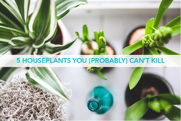 5 Houseplants You (Probably) Can't Kill