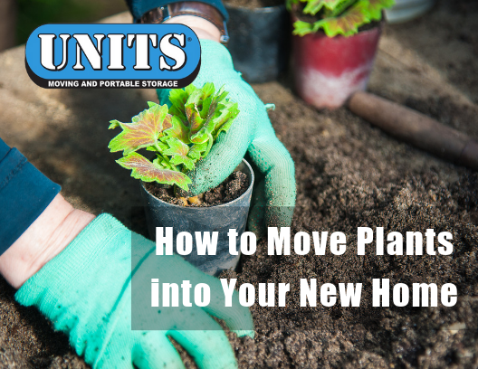 How to Move Plants into Your New Home | UNITS of Milwaukee