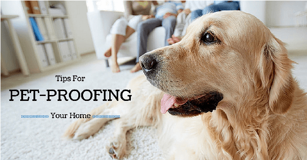 Ways to Pet Proof Your New Home